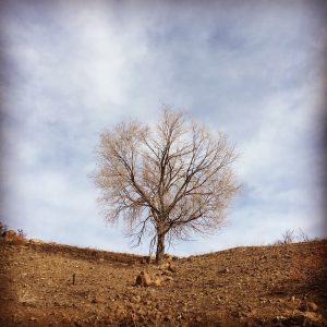 An image of a tree that has lost it's leaves by LLGriffin